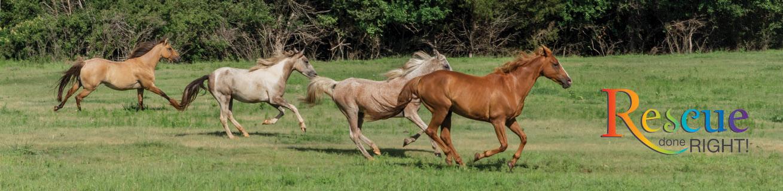 ROH Horses